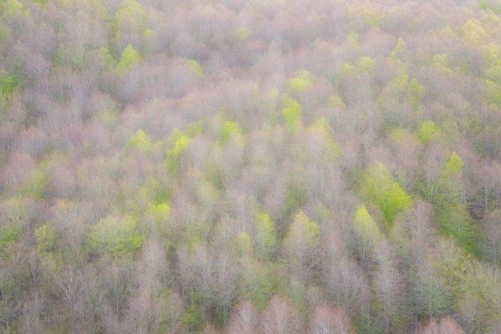 Verde nuovo nella faggeta - Monti Simbruini