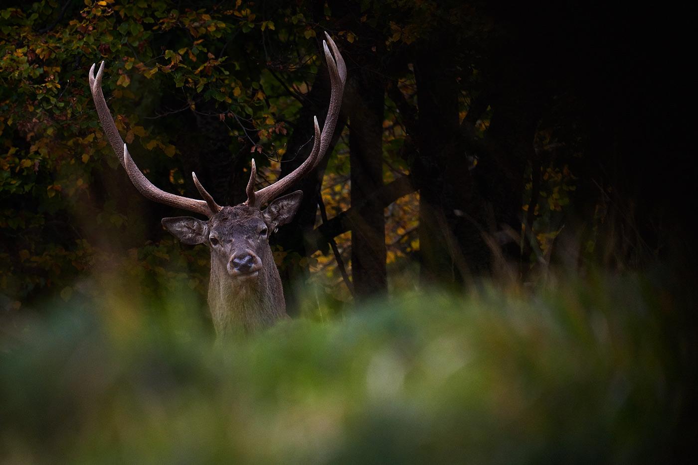 I giorni del Cervo