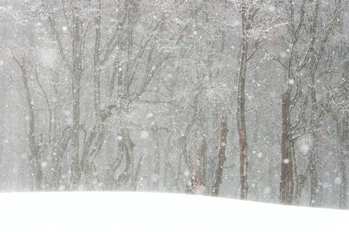 Copiosa nevicata nella faggeta - Monti Simbruini