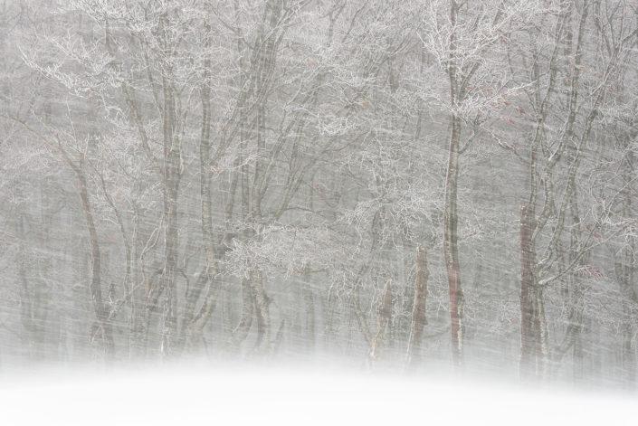 Vento e neve si abbattono sui faggi - Monti Simbruini