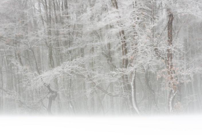 Vento tra i faggi imbiancati - Monti Simbruini
