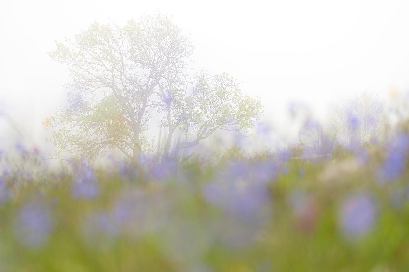 Primavera, ritorno alla vita