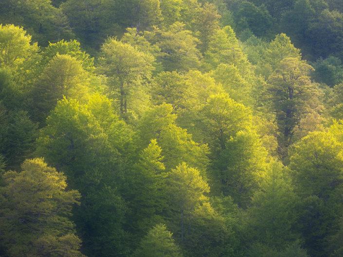 La morbida luce del tramonto si diffonde sulla faggeta vetusta - Monti Simbruini