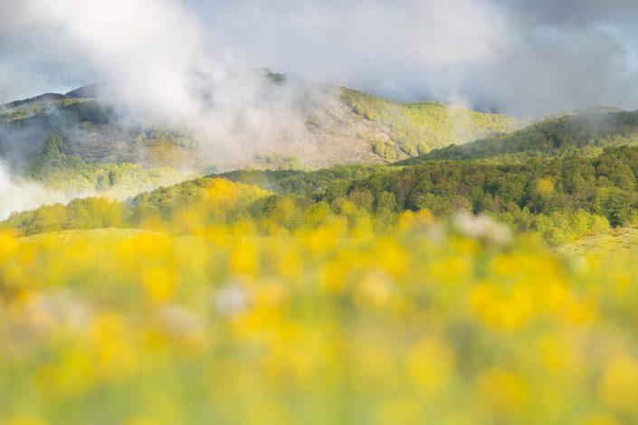Vaste fioriture di ranuncolo colorano gli altopiani - Monti Simbruini