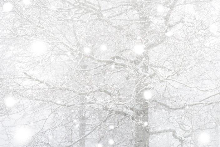 Prima neve nella faggeta - Monti Simbruini