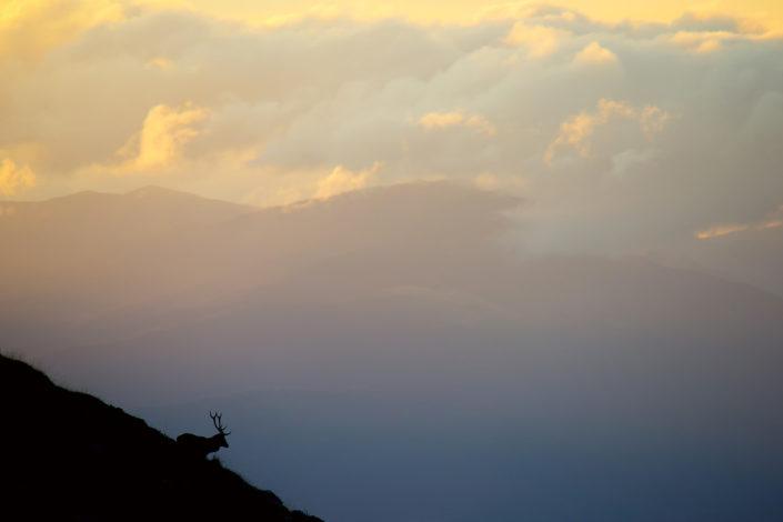 Cervo in silhoutte su un crinale all'alba - Monte Velino