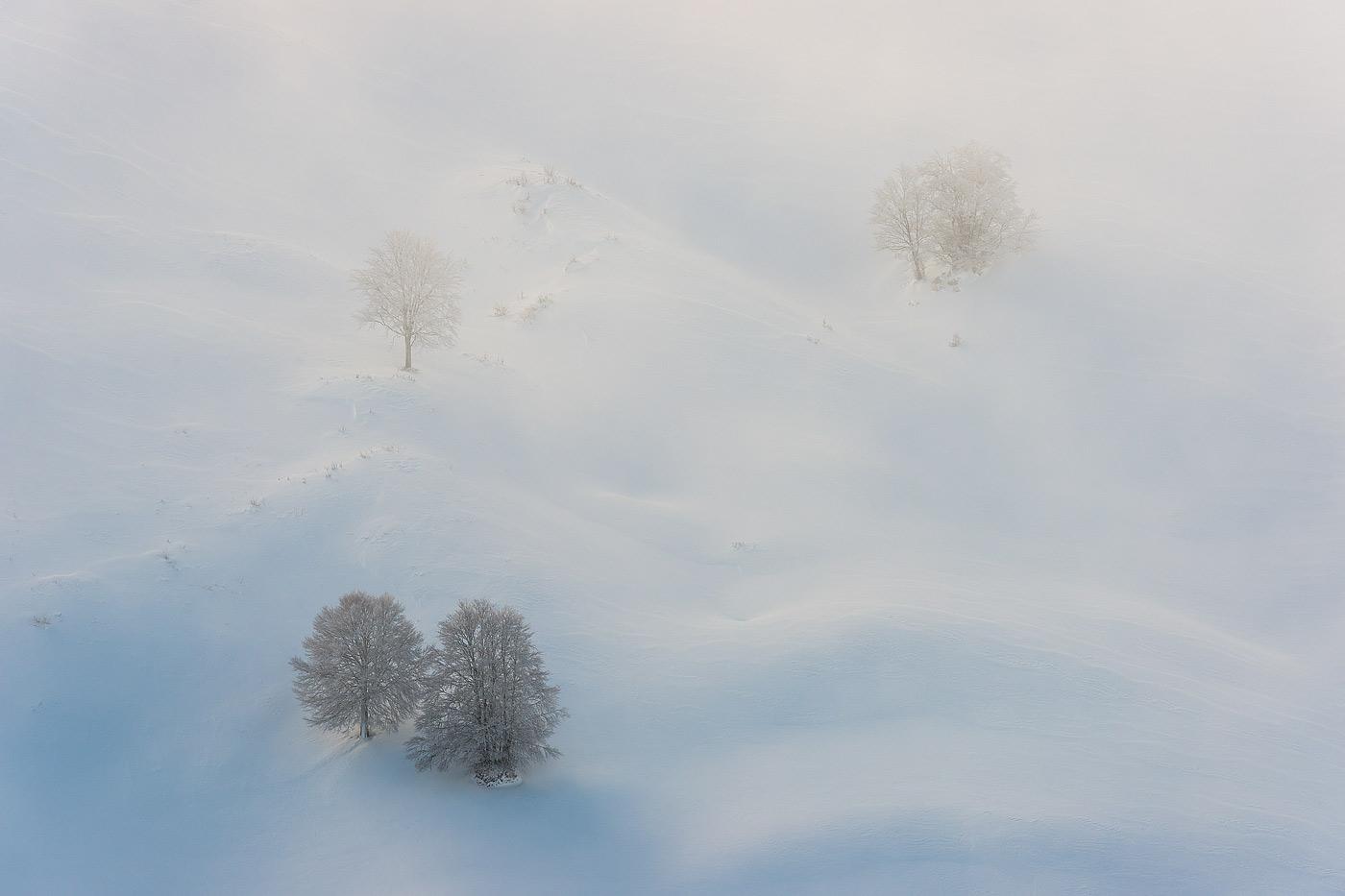 Faggi nella nebbia - Monti Simbruini