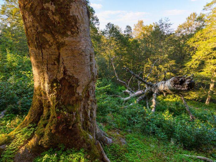 L'antico bosco