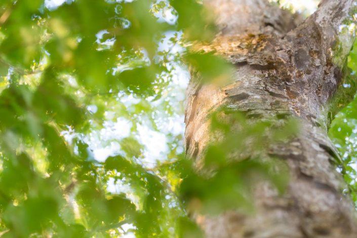 Vecchio faggio - Monti Simbruini
