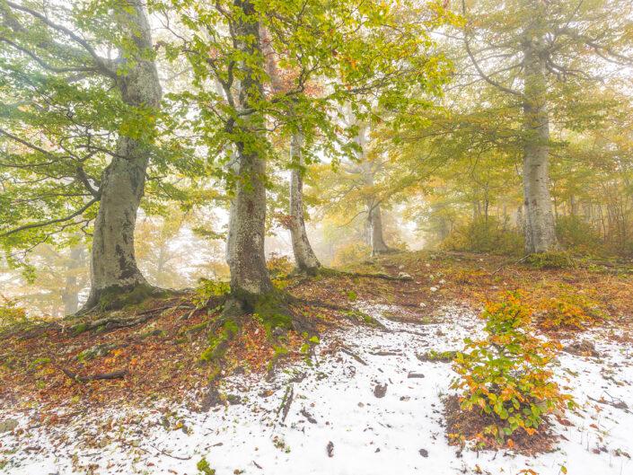 Atmosfere autunnali nella faggeta dopo una effimera nevicata - Monti Simbruini