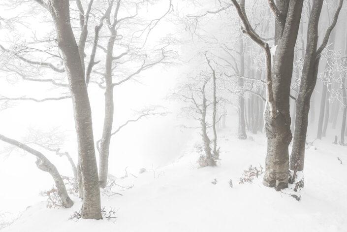 La nebbia avvolge un tratto di faggeta esposta sul margine di un crinale - Monti Simbruini