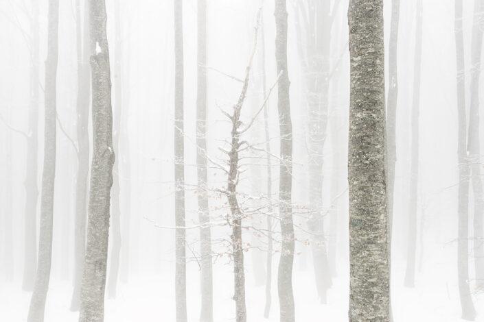 Scorcio nel bosco di faggi - Monti Simbruini